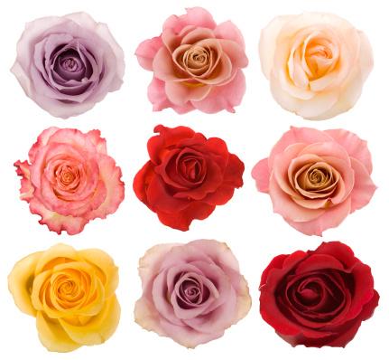 Digital Composite「Selection of beautiful roses」:スマホ壁紙(18)