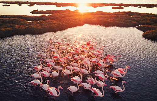 Izmir「Flamingos in Wetland During Sunset」:スマホ壁紙(6)