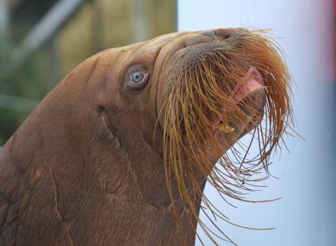 Animal Whisker「Dolfinarium Opening」:写真・画像(1)[壁紙.com]