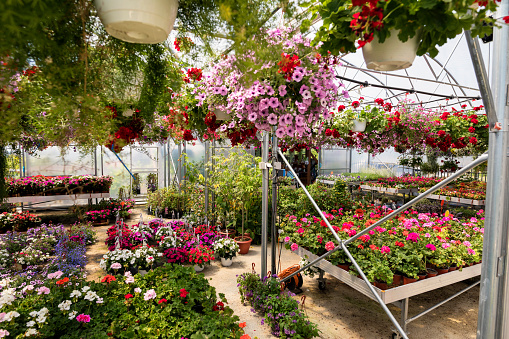 Planting「Garden center」:スマホ壁紙(18)