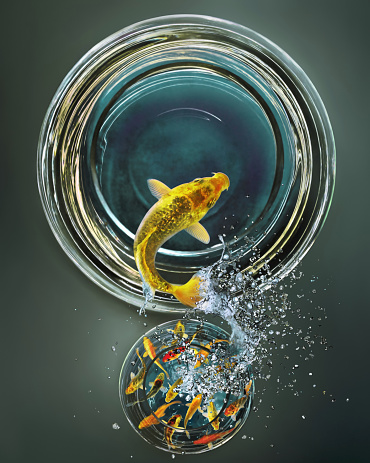 Standing Out From The Crowd「Goldfish leaping from crowded bowl to empty bowl (Digital Composite)」:スマホ壁紙(19)