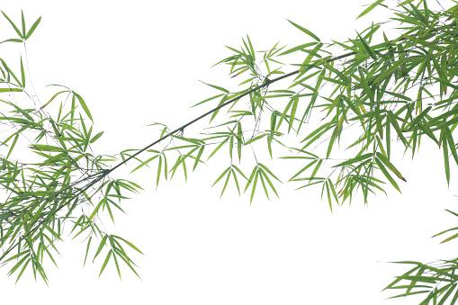 Cool Attitude「Detail view of bamboo branch.」:スマホ壁紙(15)