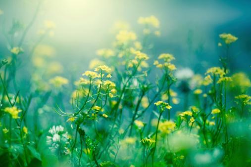 Wildflower「Field with sunlight」:スマホ壁紙(6)