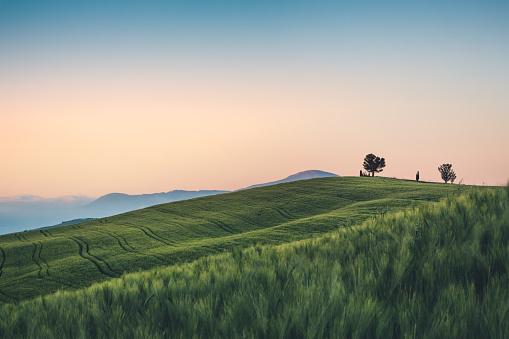 パステルカラー「小麦のフィールドにトスカーナ」:スマホ壁紙(9)