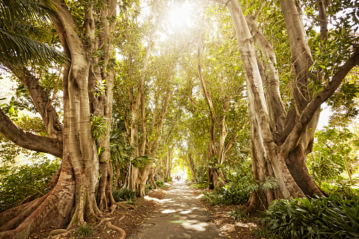 Footpath「pathway through trees on sunny day」:スマホ壁紙(9)
