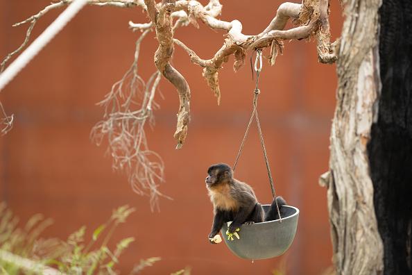 Hanging「Behind The Scenes At Sydney Zoo」:写真・画像(7)[壁紙.com]