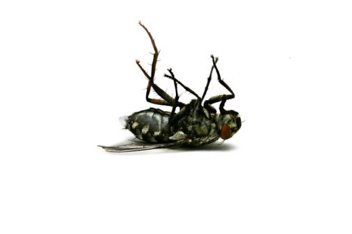 自生「Dead fly」:スマホ壁紙(3)