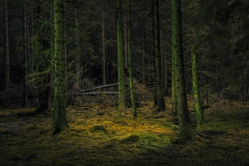 Sweden「Colored Nature」:スマホ壁紙(15)
