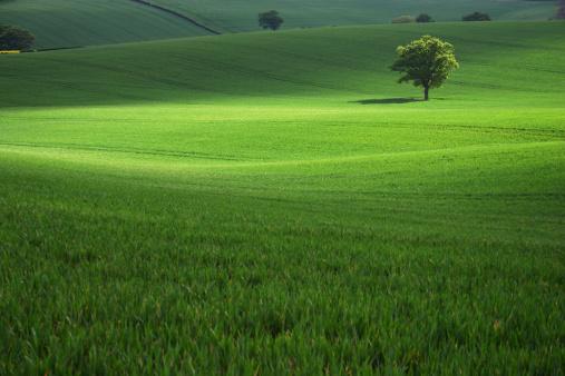 Single Tree「Field of green grass with a single tree」:スマホ壁紙(12)