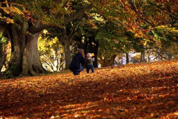 環境「Spectacular Autumn Colours Are Seen After Mild Temperatures Over The Last Two Months」:写真・画像(17)[壁紙.com]