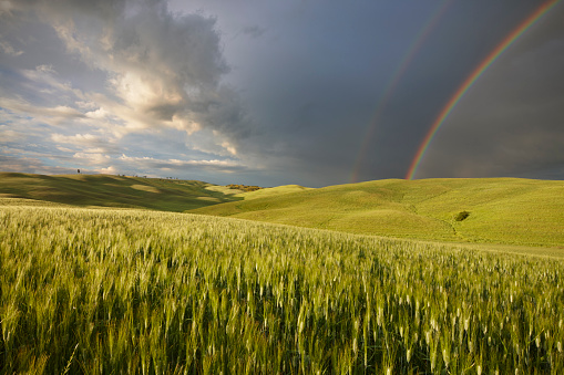 Val d'Orcia「Rainbow over corn field San Quirico, Val d'Orcia,」:スマホ壁紙(7)