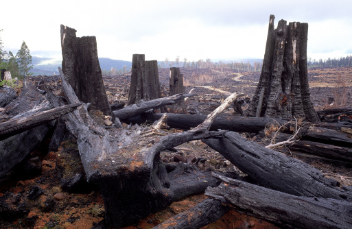 Lumber Industry「forestry clearfell & burning damage, tasmania, australia」:スマホ壁紙(6)