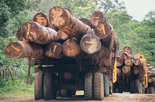 Lumber Industry「Lorries carrying logs on Sabahs main logging track close to the Kalimantan border,Borneo」:スマホ壁紙(10)