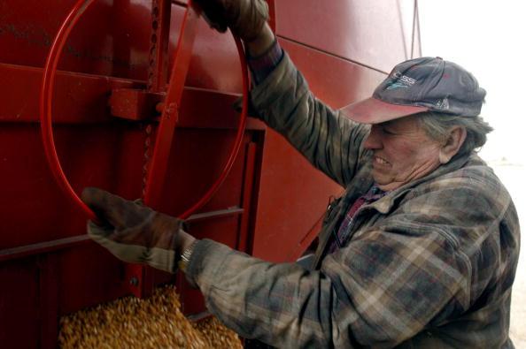 Corn「Grain Harvest Season Comes To An End In America's Heartland」:写真・画像(12)[壁紙.com]