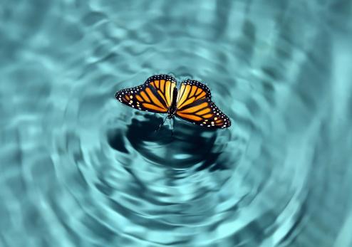 Symmetry「Butterfly in Water」:スマホ壁紙(8)