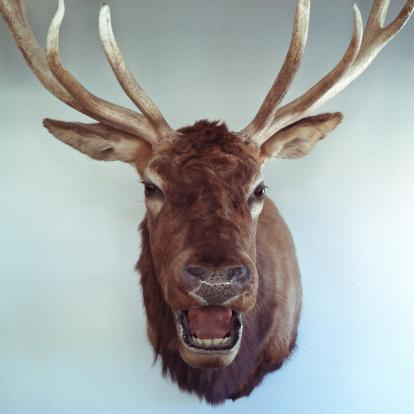 背景「Mounted deer head on a wall」:スマホ壁紙(0)