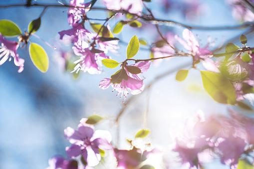 Flower Head「Pink flowers on the blue sky background」:スマホ壁紙(16)