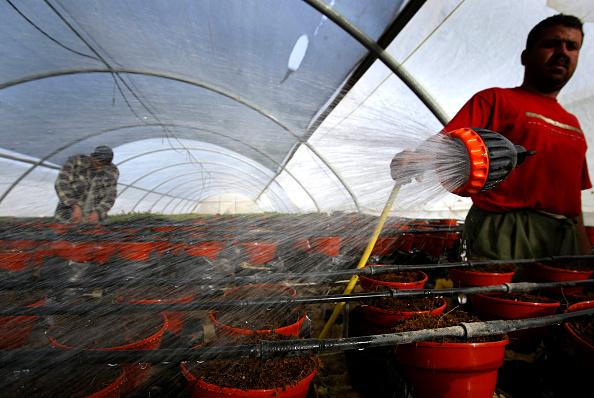 Greenhouse「Muwasi Neighbourhood Residents To Benefit From Israel's Evacuation Plans」:写真・画像(14)[壁紙.com]