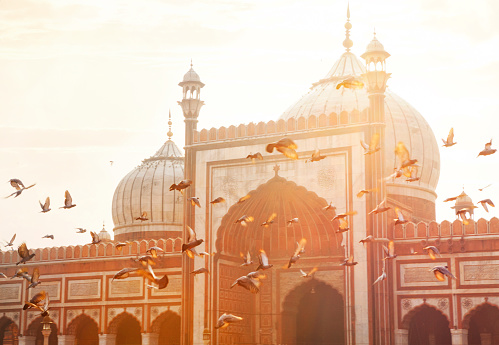 Flock Of Birds「Jama Masjid - Old Delhi, India」:スマホ壁紙(4)