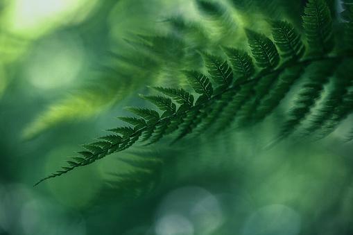 Botany「Fern Background」:スマホ壁紙(15)