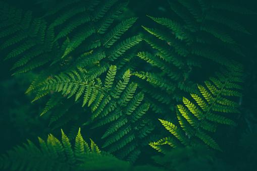 Rainforest「Fern Background」:スマホ壁紙(11)