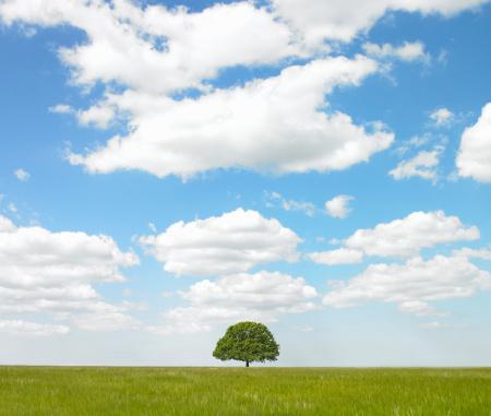 Single Tree「Single tree in countryside.」:スマホ壁紙(19)