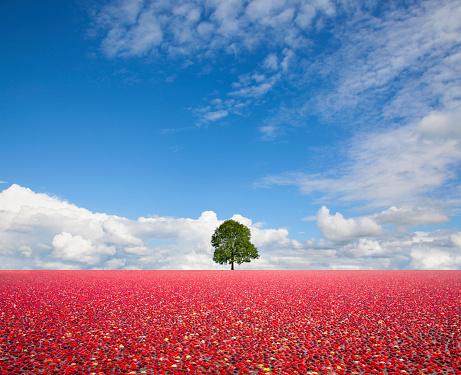 Tasting「Single tree standing in field of cranberries」:スマホ壁紙(4)