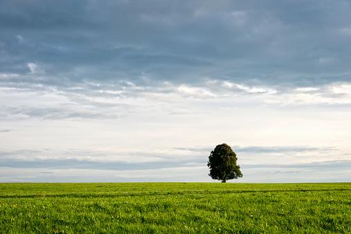 Single Tree「Single tree in a field」:スマホ壁紙(12)