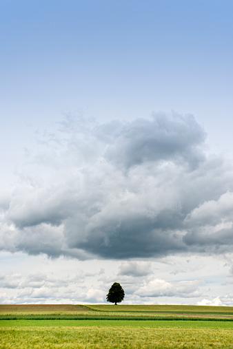 Single Tree「Single tree in a field」:スマホ壁紙(5)