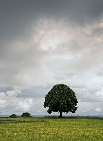 Single Tree「Single Tree」:スマホ壁紙(6)