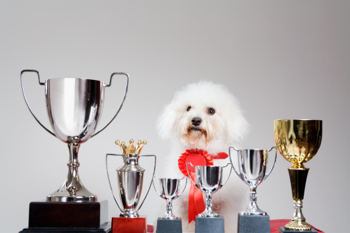 Success「Dog with a row of trophies」:スマホ壁紙(7)