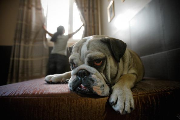 Pets「'Actuel Dogs' - Luxury Dogs Hotel Visit」:写真・画像(19)[壁紙.com]