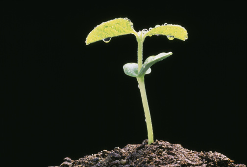 Growth「Soy Bean Sprout」:スマホ壁紙(12)