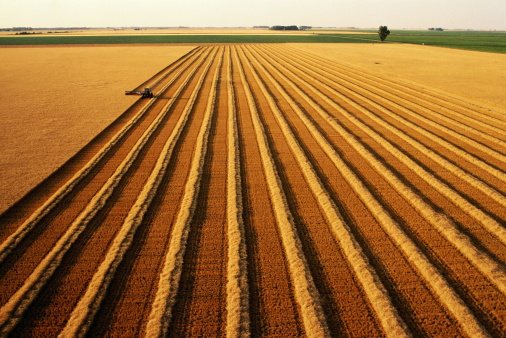 Approaching「Tractor swathing ripe wheat (Triticum sp.), aerial view」:スマホ壁紙(0)
