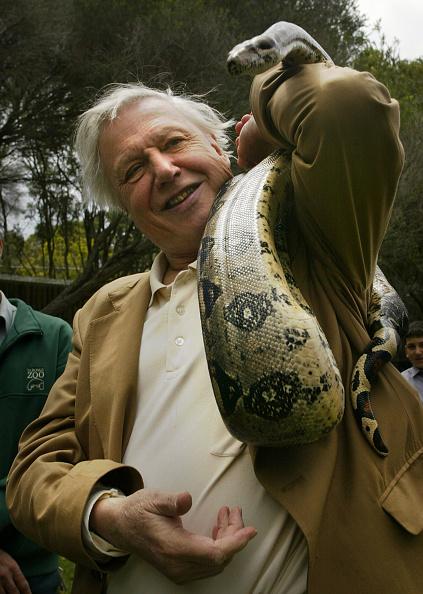 Animal「Sir David Attenborough Visits Australia」:写真・画像(18)[壁紙.com]