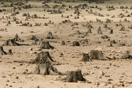 Lumber Industry「Sad image showing the increase in deforestation」:スマホ壁紙(12)