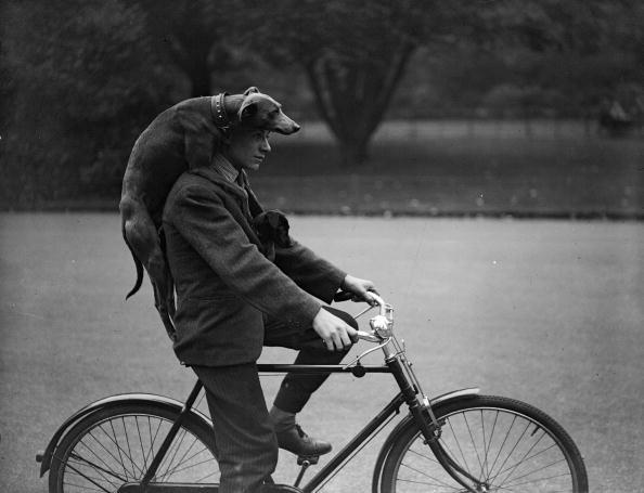 Hulton Archive「Give A Dog A Ride」:写真・画像(18)[壁紙.com]