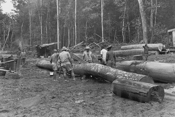 Cutting「Logging In Rio Muni」:写真・画像(9)[壁紙.com]