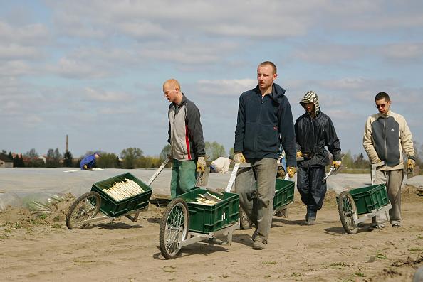 Beelitz「Beelitz Asparagus Harvest Begins」:写真・画像(17)[壁紙.com]