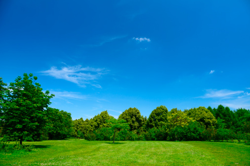 Savannah「Summer Landscape」:スマホ壁紙(15)
