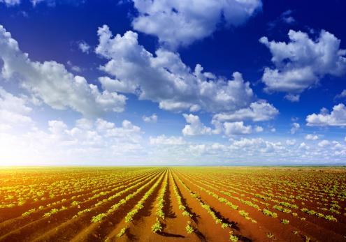 Corn - Crop「Summer landscape」:スマホ壁紙(16)
