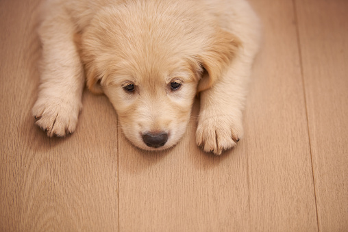 Puppy「Where's my friend?」:スマホ壁紙(9)