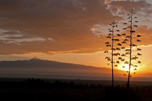 ケニア山「Mount Kenya at dawn, Africa」:スマホ壁紙(19)