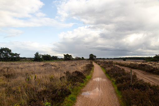 North Brabant「Path trough withered heather due to hot dry summer」:スマホ壁紙(17)