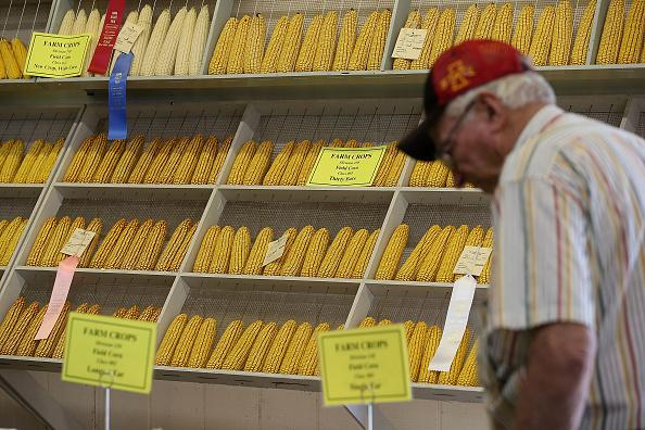 Corn「Iowa State Fair: Annual Midwestern Summer Rite」:写真・画像(5)[壁紙.com]