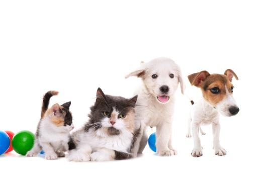 Pets「cat and dogs」:スマホ壁紙(18)