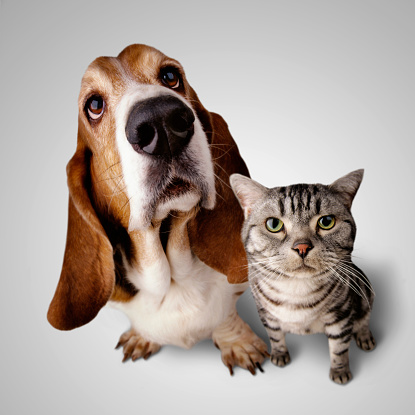 Shorthair Cat「Cat and Dog」:スマホ壁紙(18)