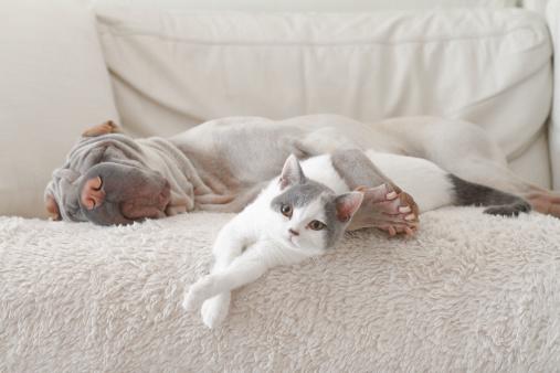 Pets「Cat and dog hugging on sofa」:スマホ壁紙(19)