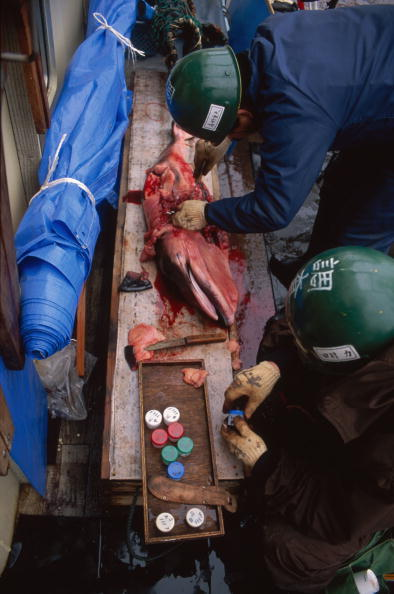 Japan「Japanese Whaling」:写真・画像(6)[壁紙.com]