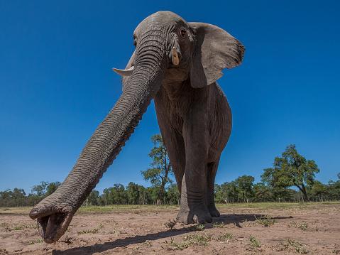 Walking「African Elephants walking to the marsh in Masai Mara」:スマホ壁紙(16)